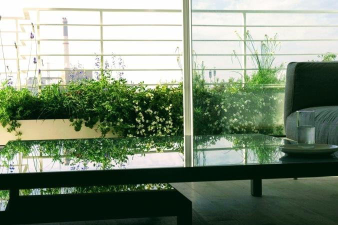 צמחים למרפסת